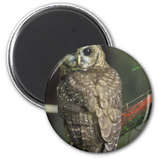 Spotted owl 2 inch round magnet
