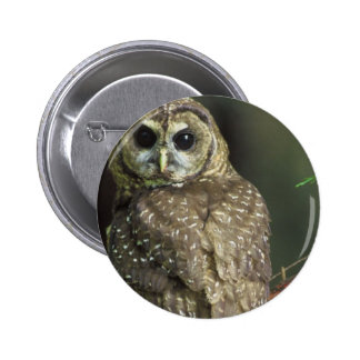 Spotted Owl Button