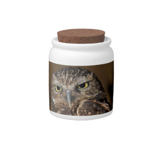 Spotted  Owl Candy Jar