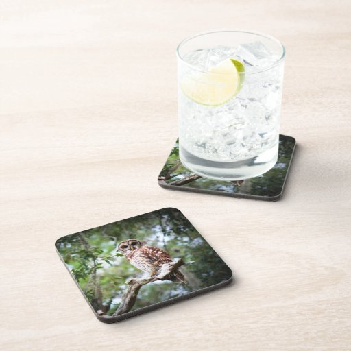 Spotted Owl Coasters