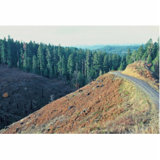 Spotted Owl Habitat Clear-cutting Cut Out