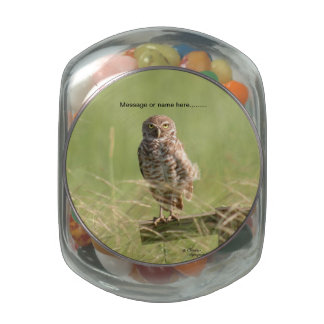Spotted owl Jelly Belly Jar Glass Jars