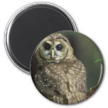 Spotted Owl Magnet Magnets