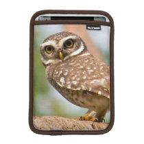 Spotted owl on morning flight. iPad mini sleeve