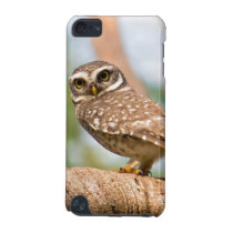 Spotted owl on morning flight. iPod touch 5G case