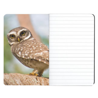 Spotted owl on morning flight. journal
