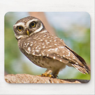 Spotted owl on morning flight. mouse pad