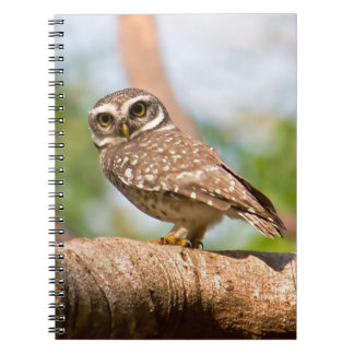 Spotted owl on morning flight. notebook