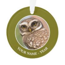 Spotted owl on morning flight. ornament
