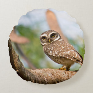 Spotted owl on morning flight. round pillow