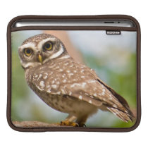 Spotted owl on morning flight. sleeve for iPads