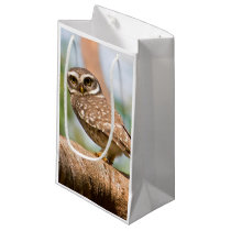 Spotted owl on morning flight. small gift bag