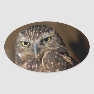 Spotted  Owl Oval Sticker