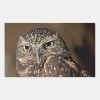 Spotted  Owl Rectangular Sticker