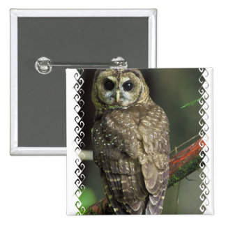 Spotted Owl Square Pin