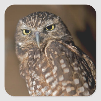 Spotted  Owl Square Sticker