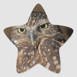 Spotted  Owl Star Sticker
