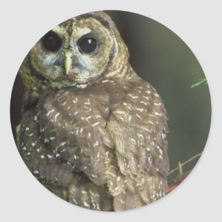 Spotted Owl Sticker