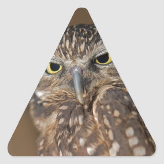 Spotted  Owl Triangle Sticker