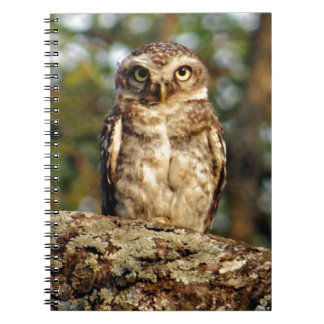 Spotted owlet notebook