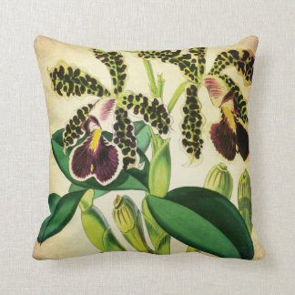Spotted Phalaenopsis Orchid Vintage Botanical Pillow