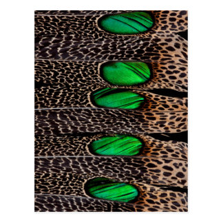 Spotted pheasant feather pattern postcard