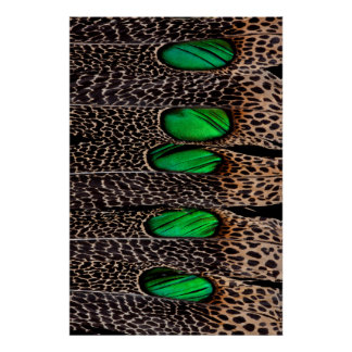 Spotted pheasant feather pattern poster