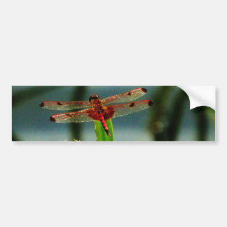 Spotted  Red and Black Dragonfly Bumper Stickers