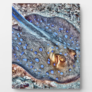 Spotted Reef Ray Display Plaques