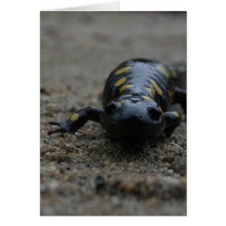 Spotted Salamander Card
