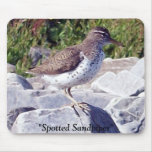Spotted Sandpiper 1 Mousepad