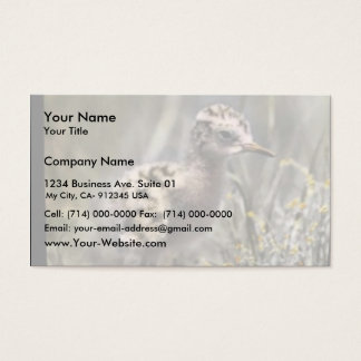 Spotted sandpiper business card