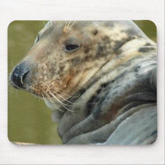 Spotted Seal Mouse Pad