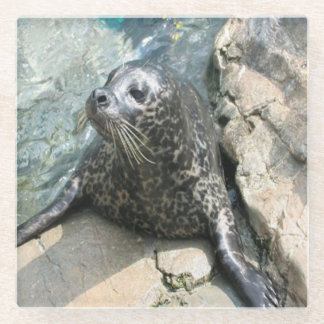 Spotted Seal Photo Square Glass Coaster