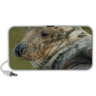 Spotted Seal Speakers