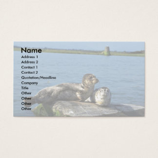 Spotted Seals Business Card