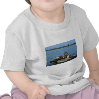 Spotted Seals Shirts