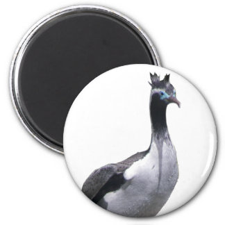 Spotted Shag Magnet