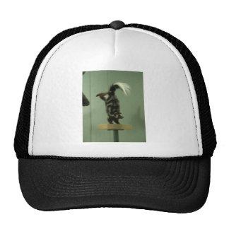 Spotted skunk; museum exhibit trucker hat