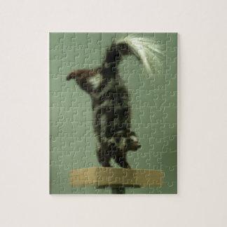 Spotted skunk; museum exhibit puzzle