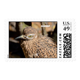 Spotted Thick-knee Dikkop Postage