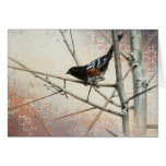 Spotted Towhee Blank Card by Andrew Denman