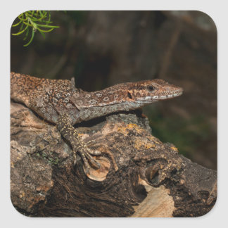 Spotted Tree Monitor Square Sticker
