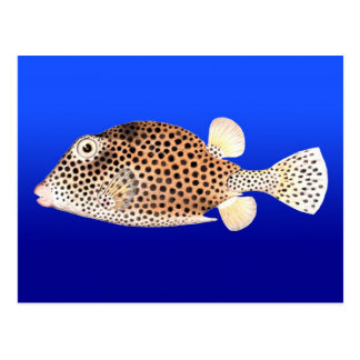 Spotted Trunkfish on Blue Background Postcard