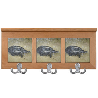 spotted turtle coming to water surface coat racks