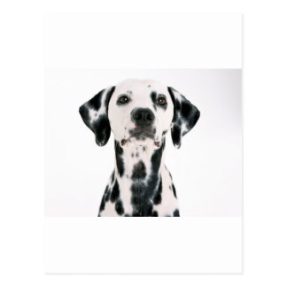 SPOTTY DOG DALMATION POSTCARD