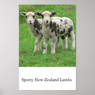 Spotty NZ Lambs Print
