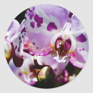 Spotty Orchid Classic Round Sticker