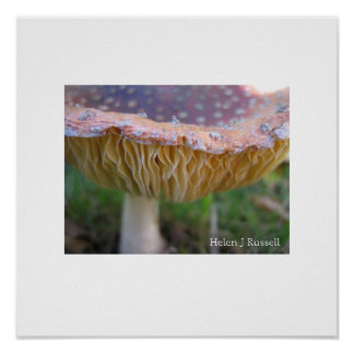 Spotty toadstool poster