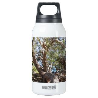 Sprawling Tree Near Santa Barbara on Coast 10 Oz Insulated SIGG Thermos Water Bottle